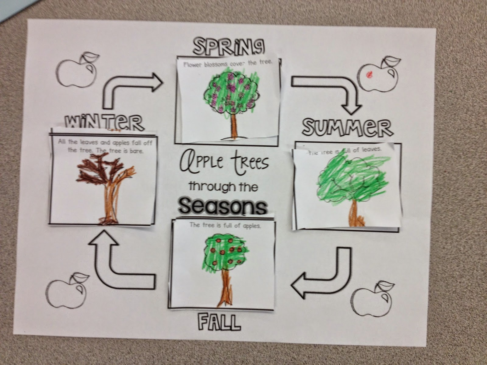 Kinder Kicks In Room 6 The Seasons Of An Apple Tree